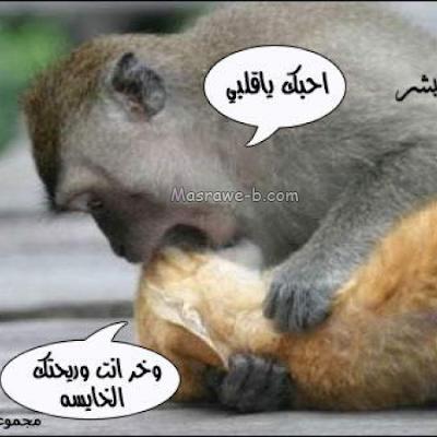 صورفيس بوك مضحكة  اجمل بوستات ضحك للنشر بالفيسبوك Ab0018e042
