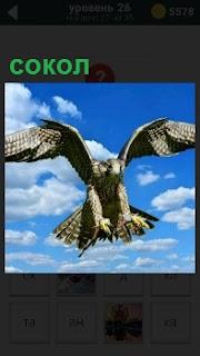 На фоне ярко голубого неба с облаками летит сокол и готов когтями схватить добычу внизу