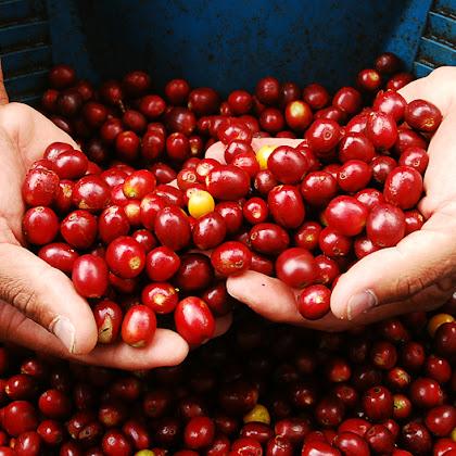 Atelier Nespresso - Da Origem até à Chávena