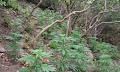 Χασισοφυτεία με 1.512 δενδρύλλια στο Ρέθυμνο