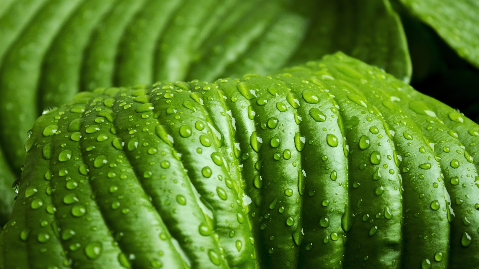 droplets on leaves 4k -#main