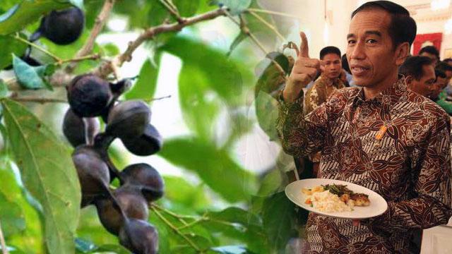 Jokowi Minta Petani Sawit Tanam Jengkol, PAN: Jaka Sembung Bawa Golok