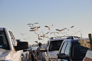 a flock of seagulls flying behind a ferryboat