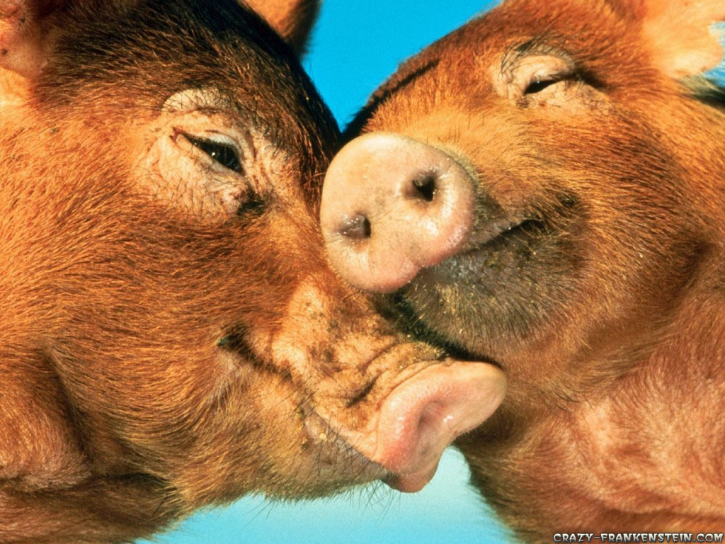 happy valentines day animal love pictures - Valentines Animals