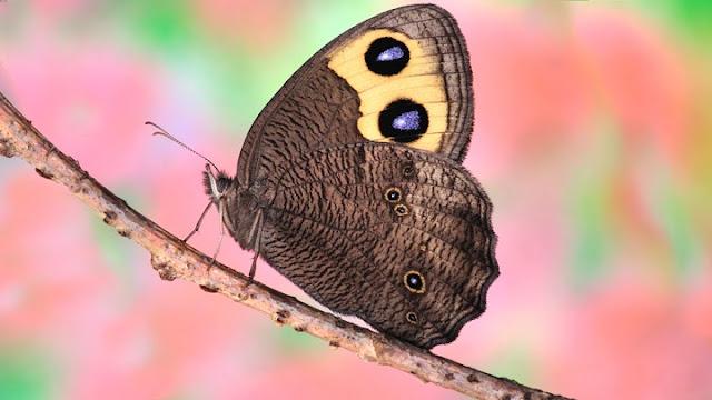 30 Fakta Cantik Tentang Kupu-kupu