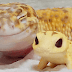 This Captivating Smiling Gecko Will Definitely Enliven Your Day