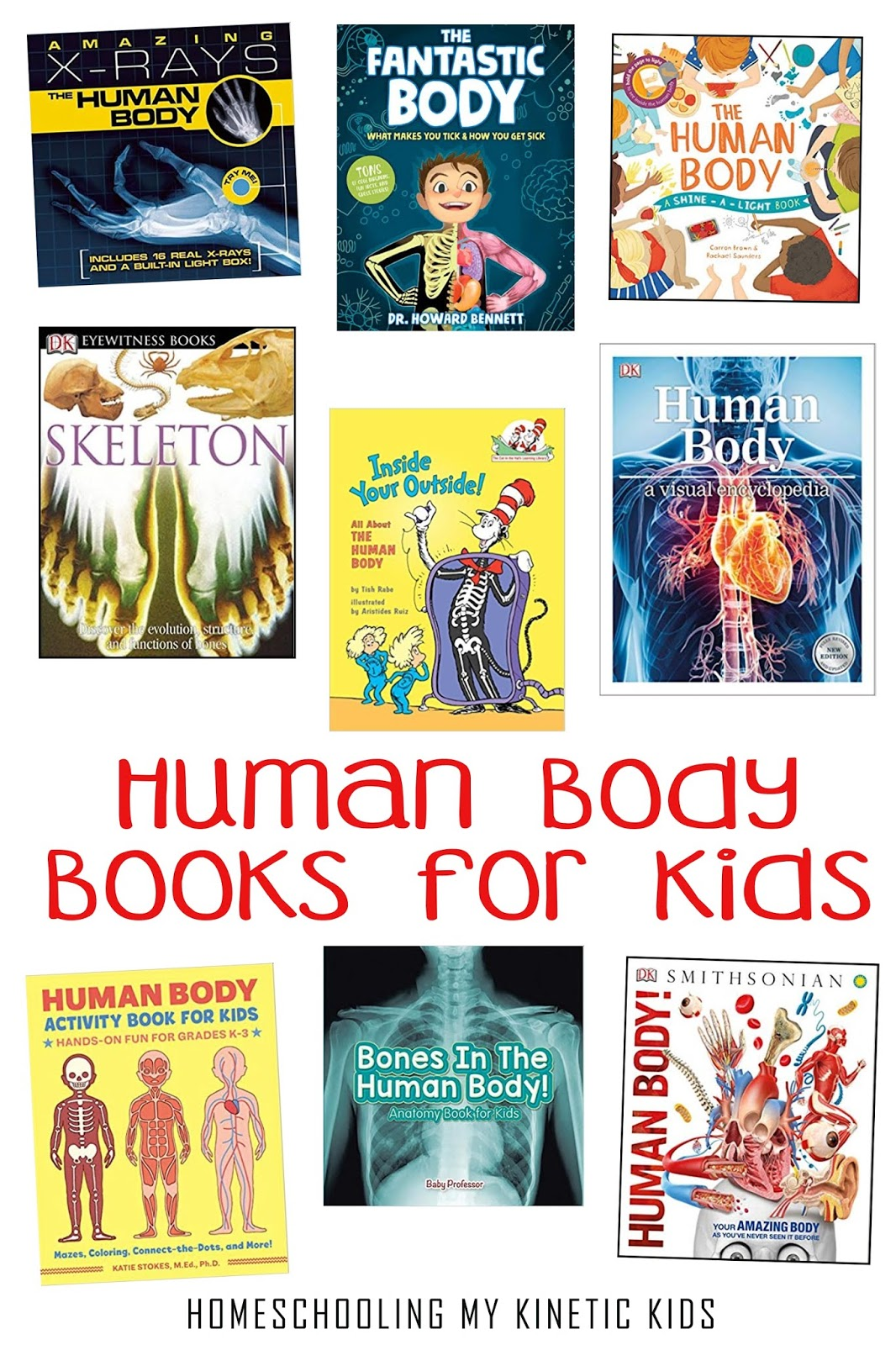 The Human Body Stuff For Kids
