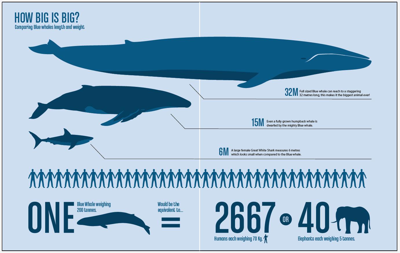 Epic Footage Records Blue Whale 5km Off WA Coast