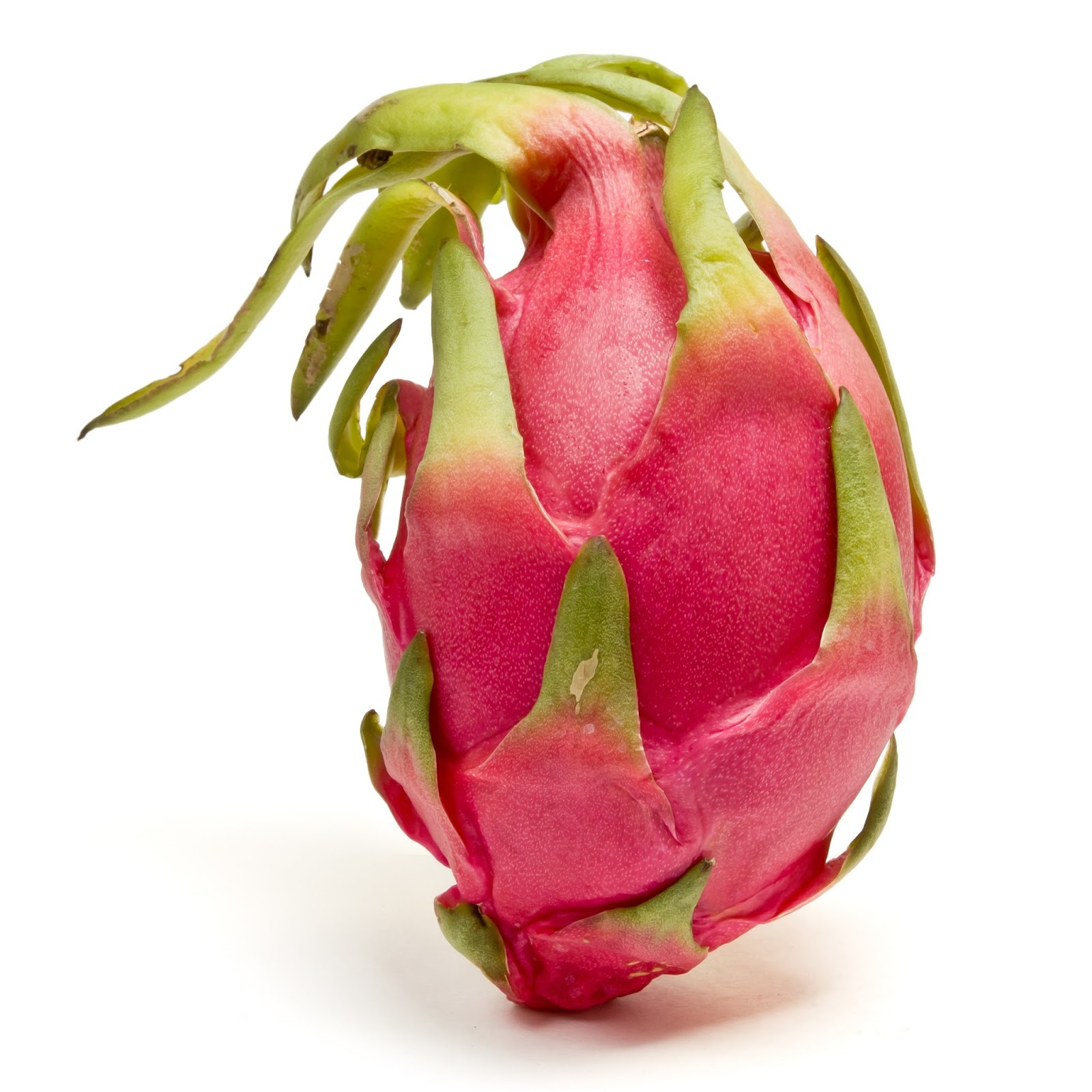 Growing Dragon Fruit Tree: Aquariusagri: Dragon Fruit Plant Cost Of Cultivation