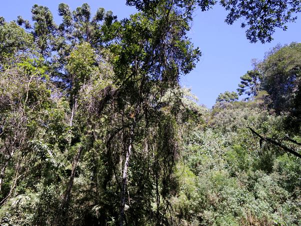 Minha Lua de Mel: Local Romântico em Monte Verde / MG Pousada Viviê