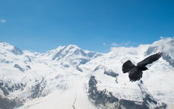 Wallpaper: Raven above Alps