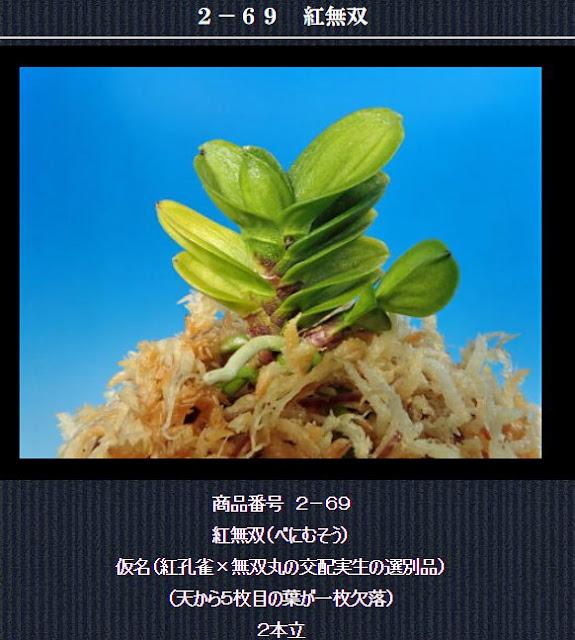 http://www.fuuran.jp/2-69html