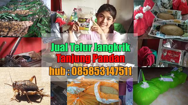 Jual Telur Jangkrik Tanjung Pandan Hubungi 085853147511