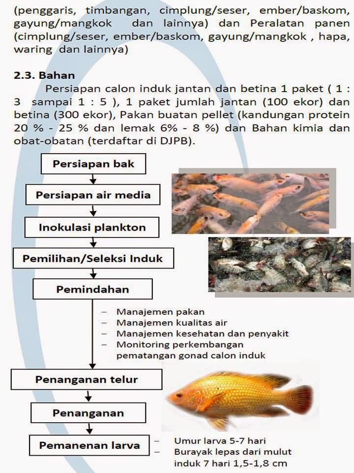 Analisa Usaha Pembenihan Ikan Nila Salin Oreochronis Sp