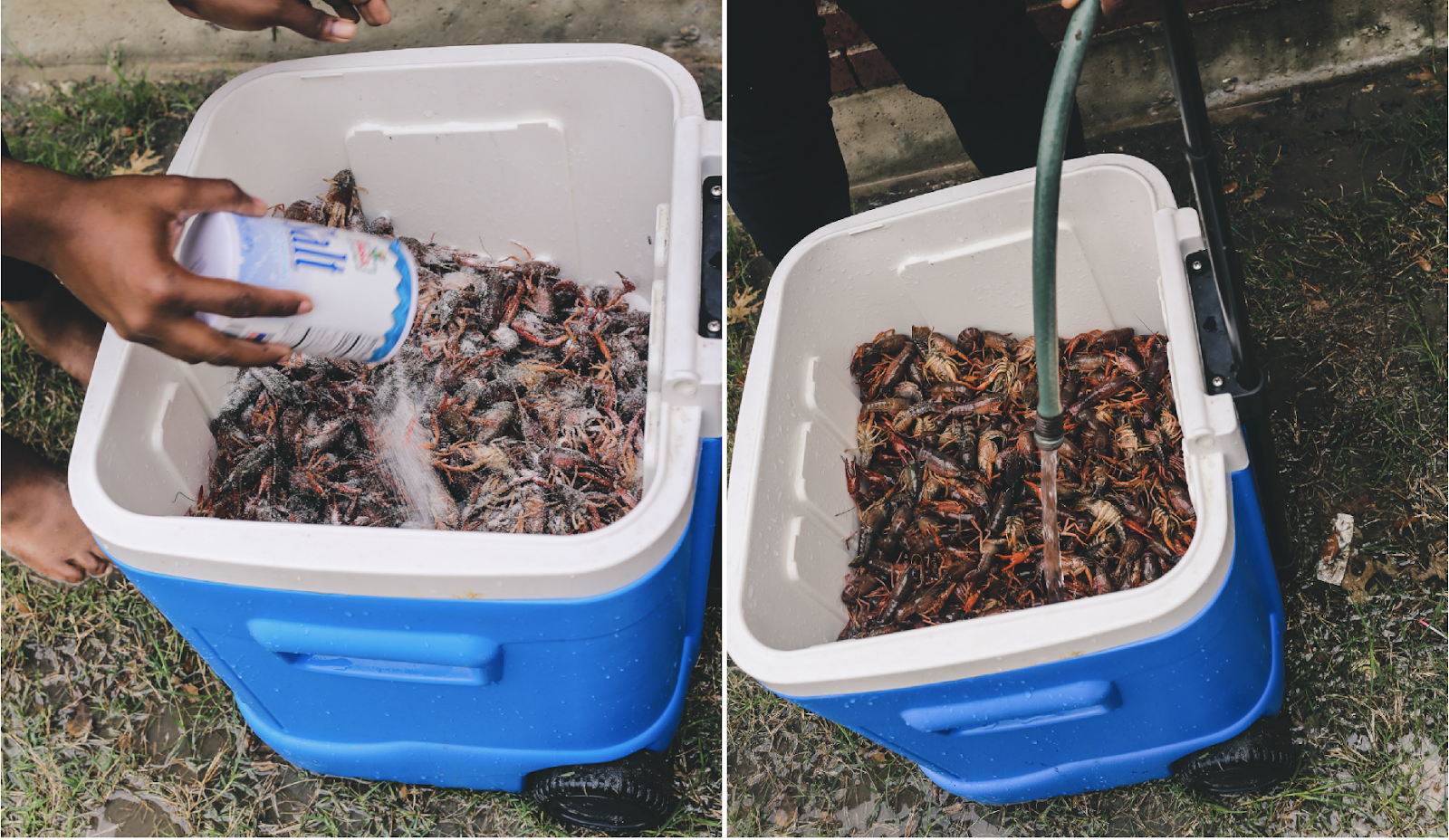 Salt Cleaning Crawfish