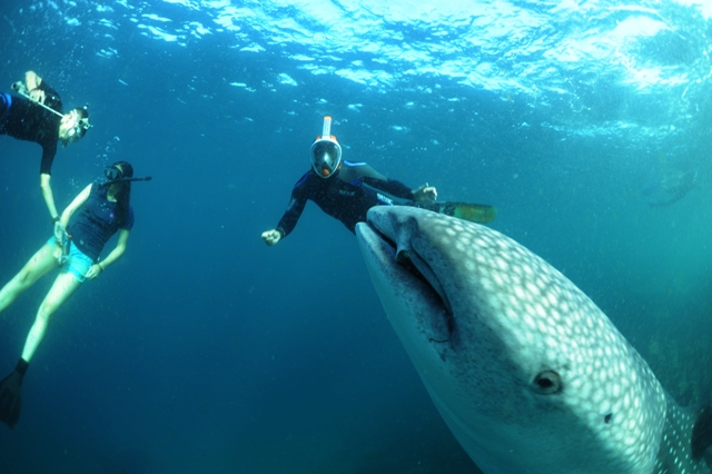 69368d1d8f3cbd What on earth is that? Savi, Freya and a shark wonder what has just  appeared, photo Luigi de Bacco