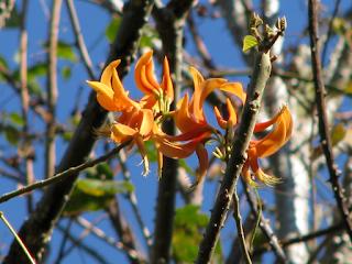 Poró Flowers