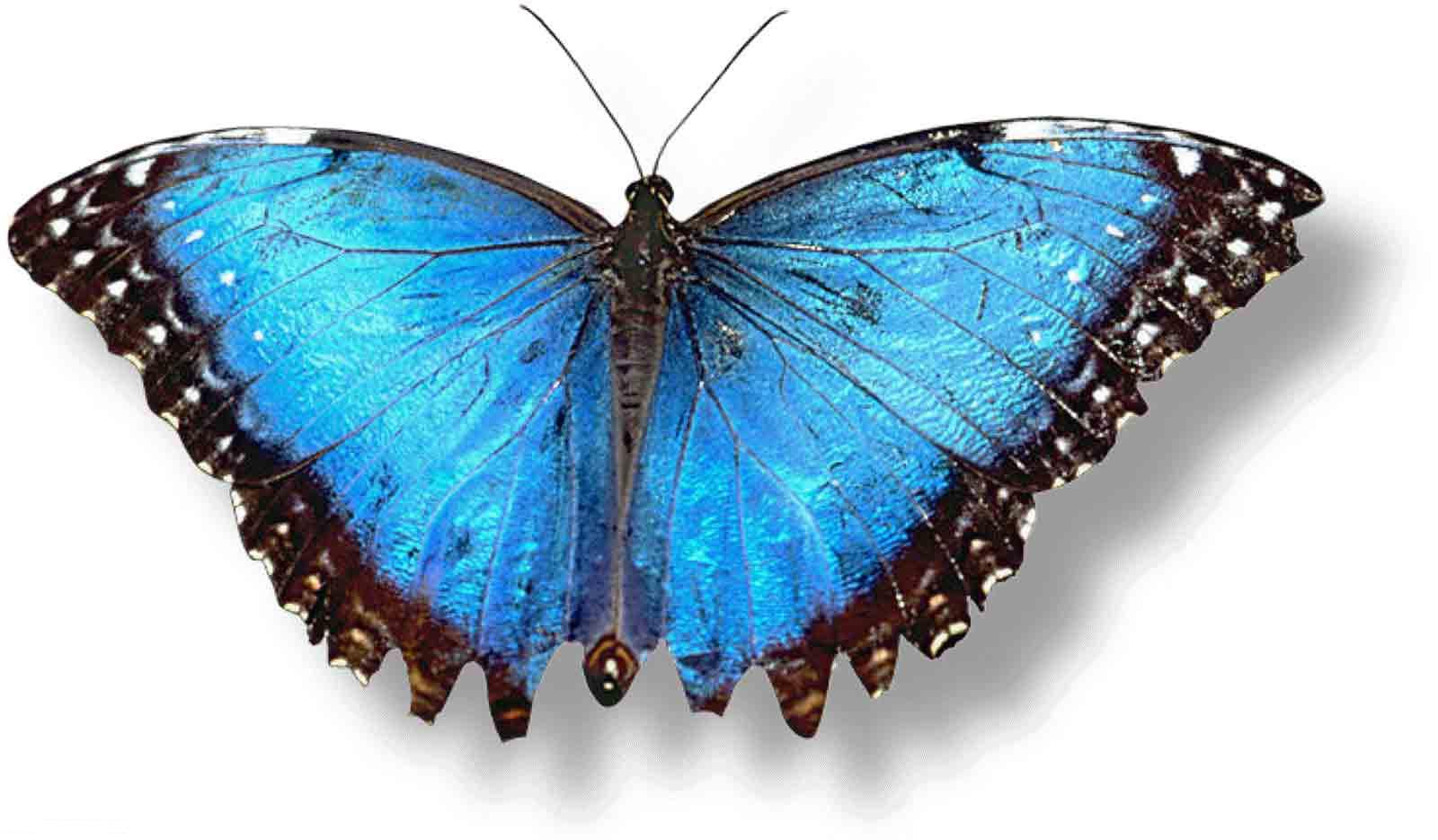 Hd Iphone Wallpapers Fall En G 252 Zel Hd Kelebek Masa 252 St 252 Resimleri Hd Butterfly