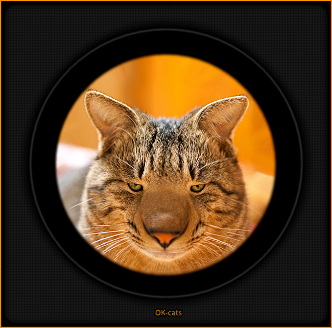 Photoshopped Cat picture • Funny cat with big nose and tiny eyes • Fisheye lens effect :)
