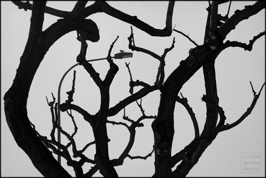 fotografía, naturaleza, Límites, Valencia, árbol, ramas, arte, paloma