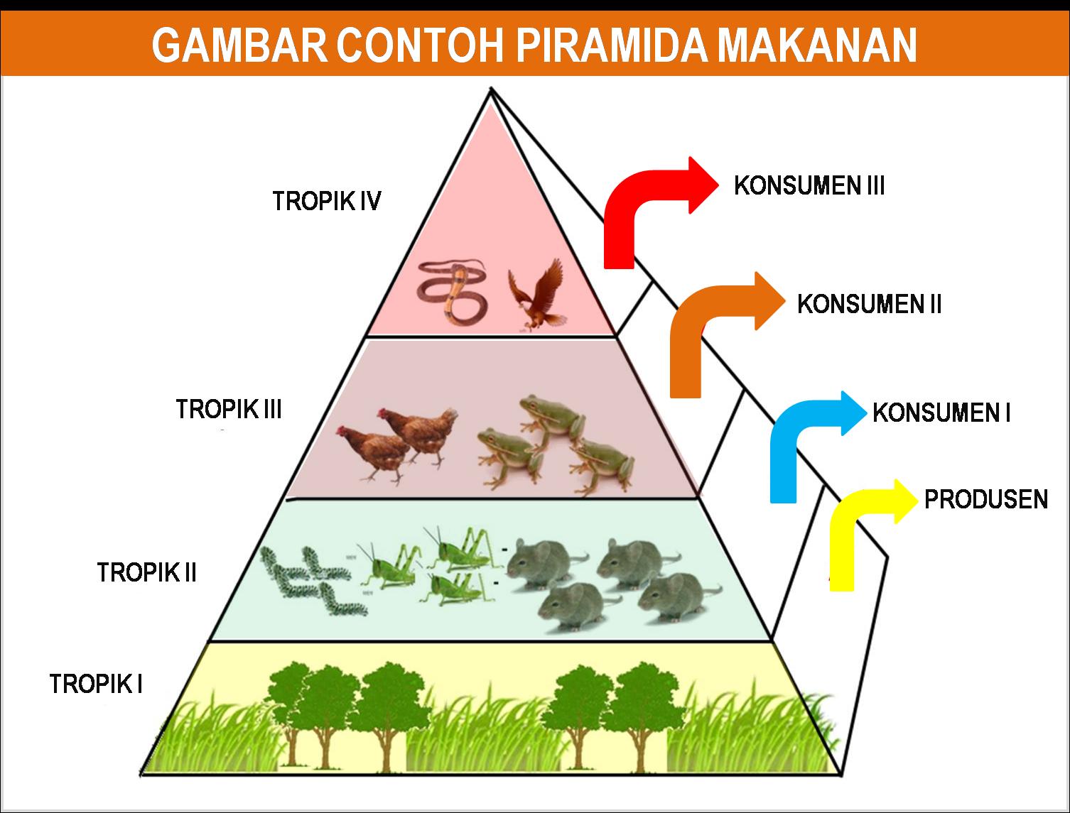 Gambar Dan Penjelasan Piramida Rantai Dan Jaring Makanan Freewaremini