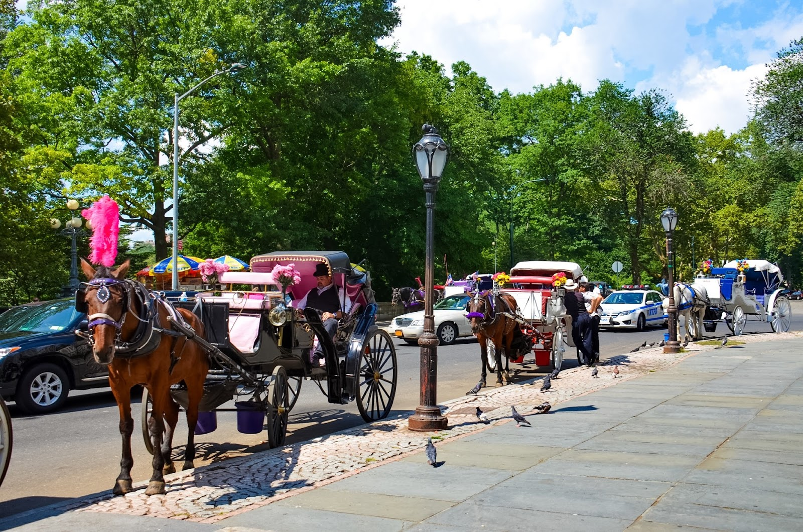 horse and carriage ride central park