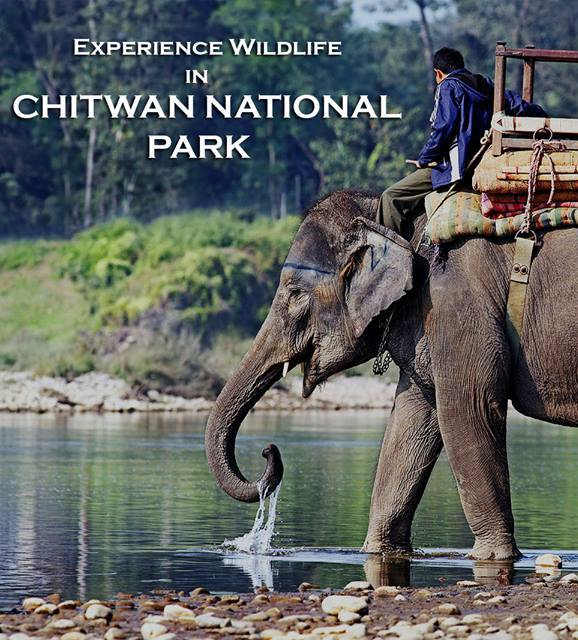 Experience wildlife in chitwan national park.