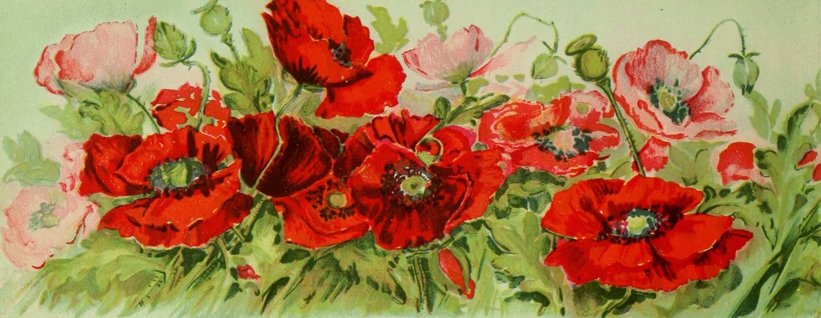 FREE Public Domain Poppy pictures