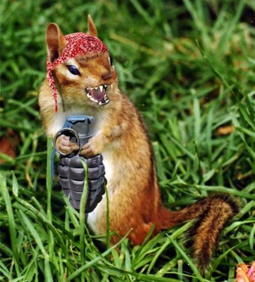 Funny Squirrels Images And Photos 2011 Funny Animals
