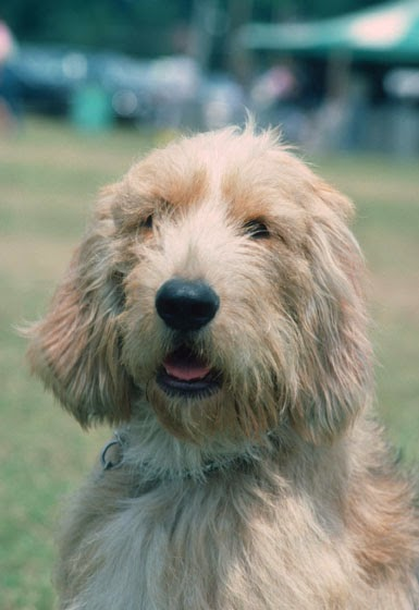Puppy Breeds Pictures and Information