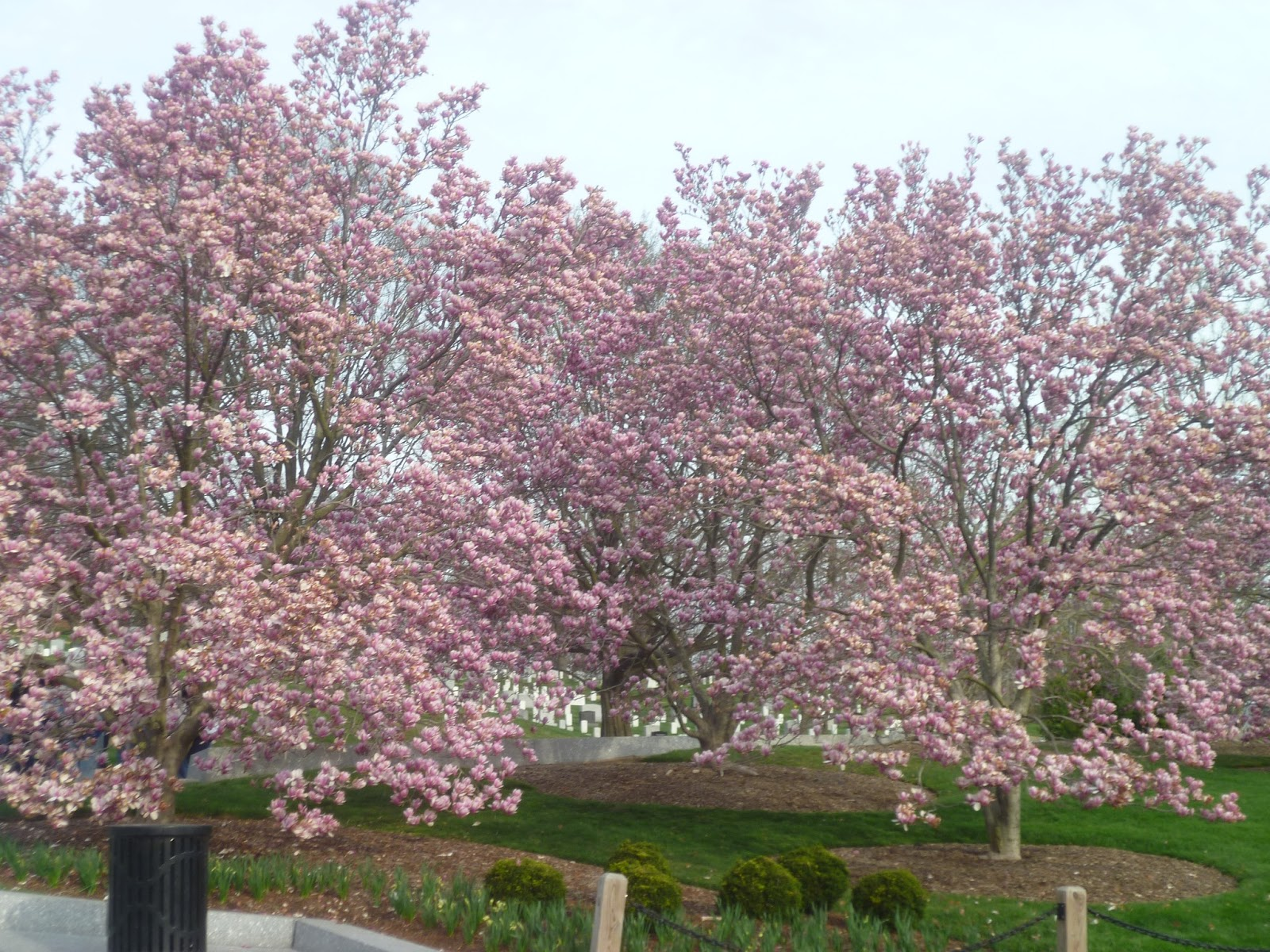 Excel Math Japanese Cherry Trees