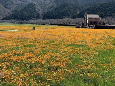 桜田の花畑