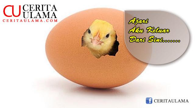 Bagaimana Aku Melihat Allah ( Part V )    Anak Ayam di dalam Telur....