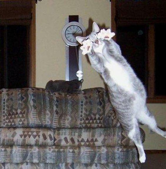 Epic Cat Photo Bomb funny joke picture