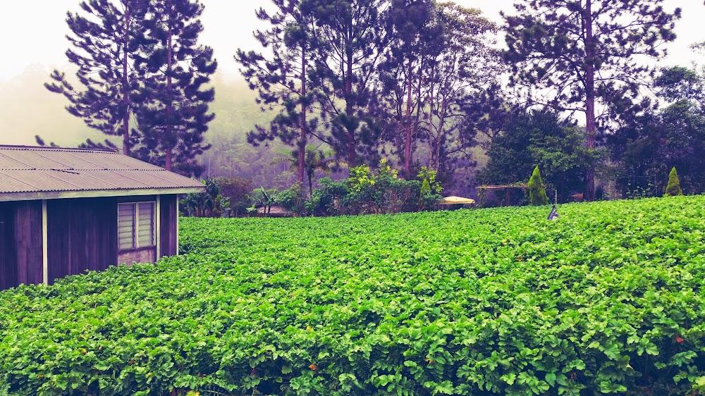Kebun di ASZI Chalet