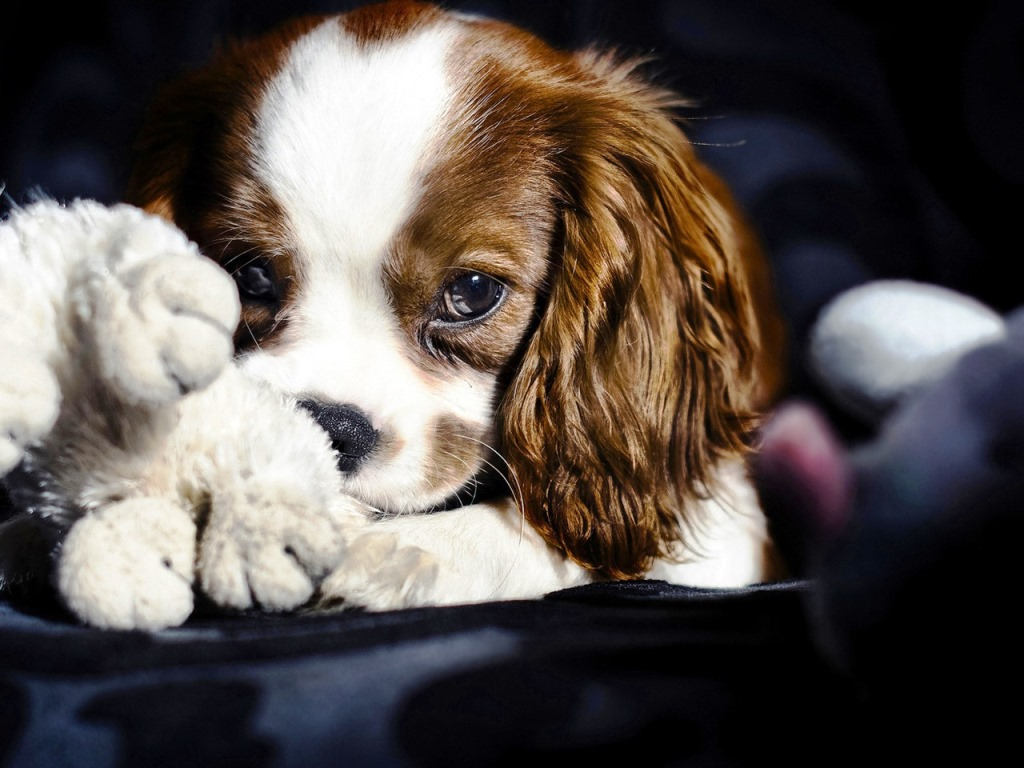 54 Lovely Cute Puppies Wallpapers