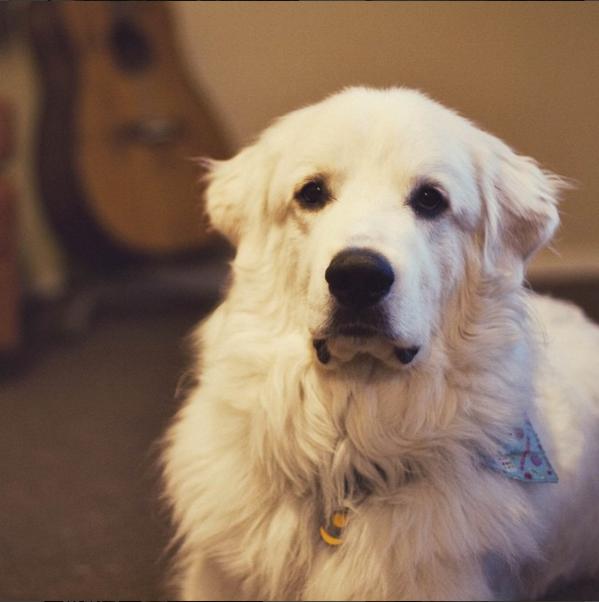 raw image of white dog face