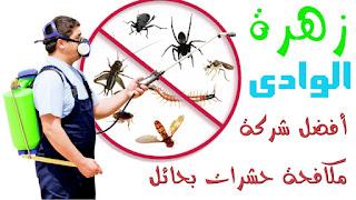 شركة زهرة الوادى - أفضل شركة مكافحة حشرات بحائل