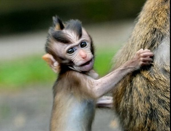 Funny Monkey Hairstyles 2012 All Funny