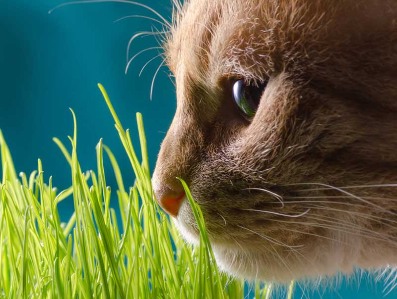 Can Cats Smell Bad Breath