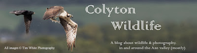 Colyton Wildlife