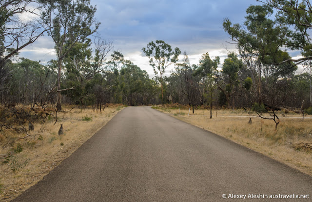 There are many kangaroos sitting along the empty rural road