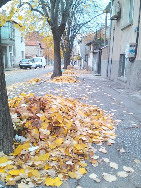Piles of Leaves, Yambol, Ямболm, women, men