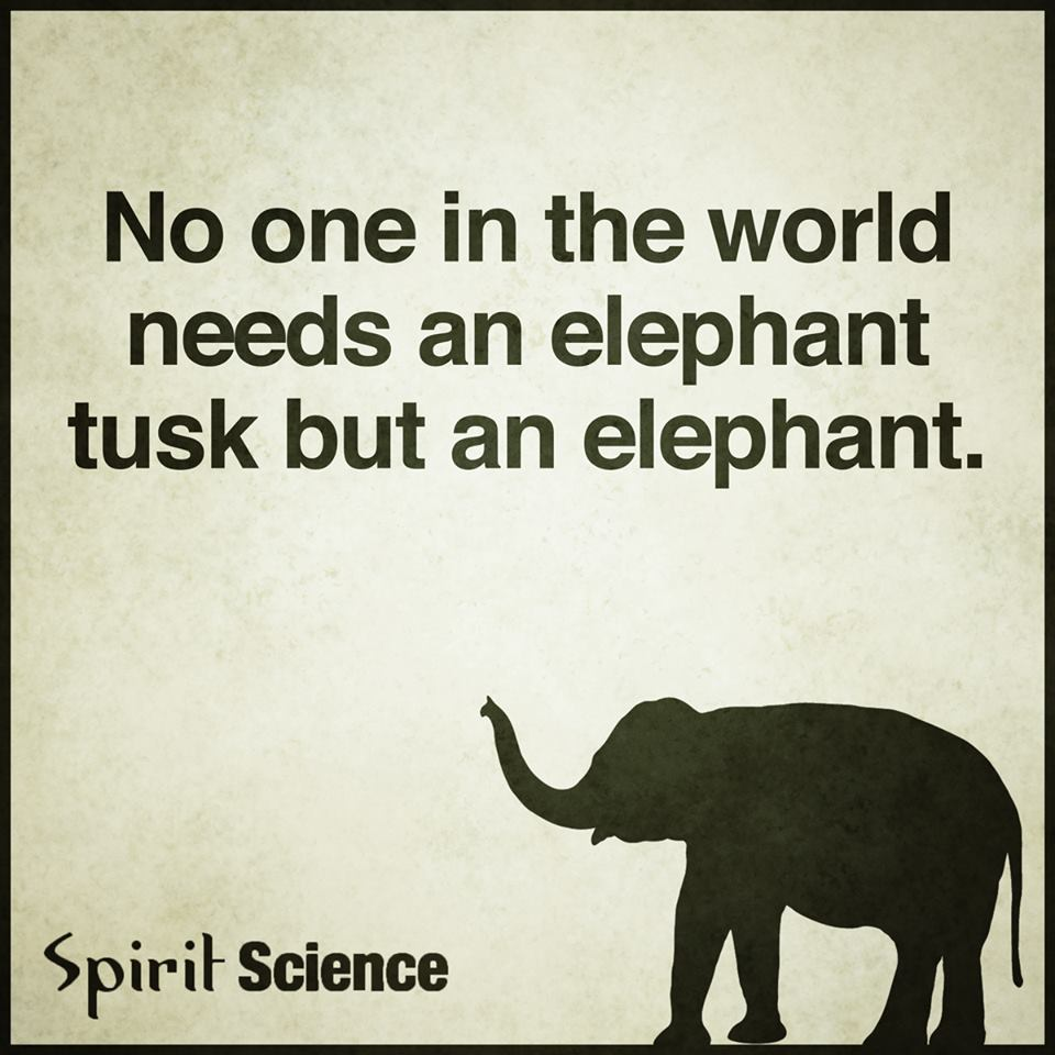 Love Each Other When Two Souls: No One In The World Needs An Elephant Tusk But An Elephant