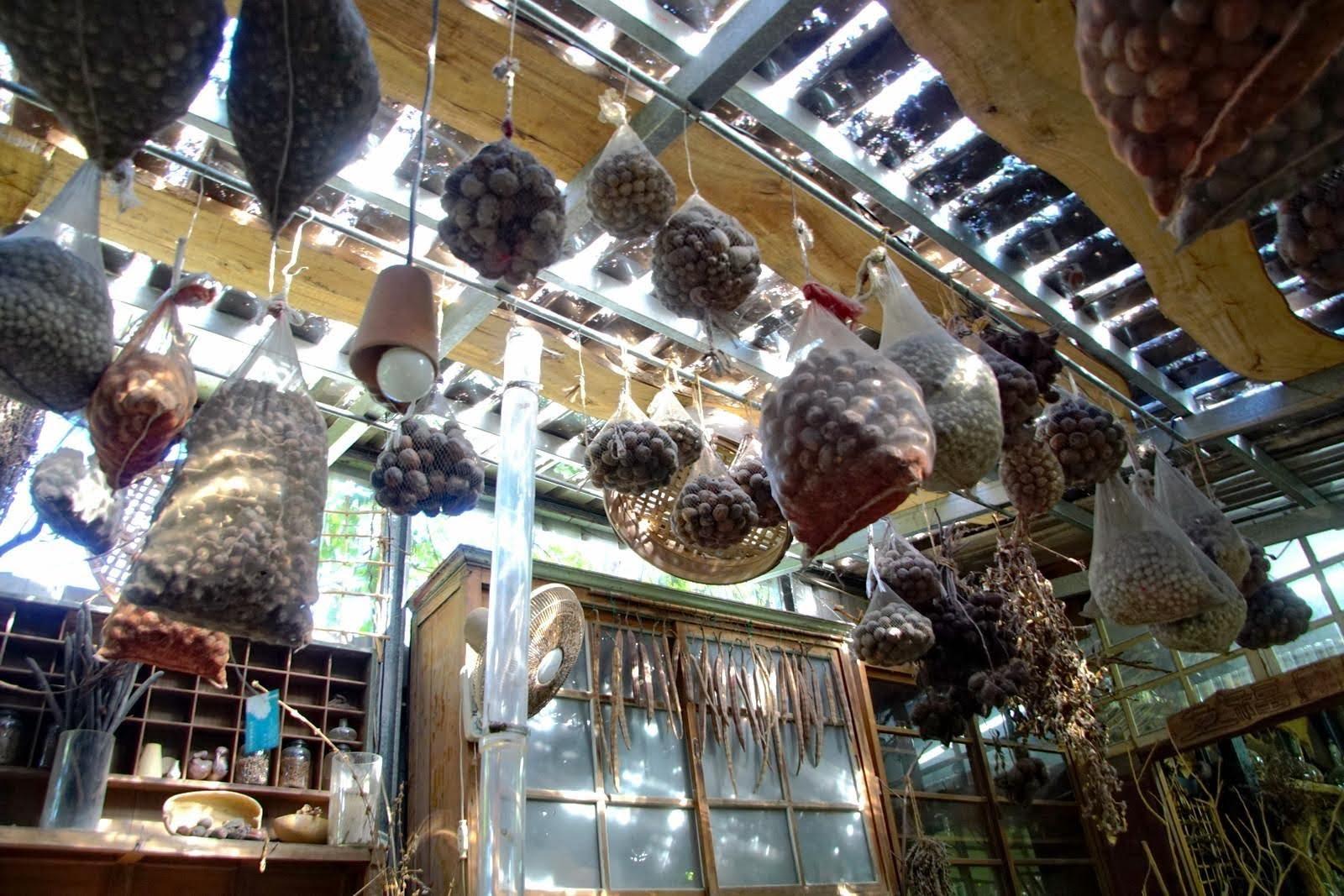 [台南][北區] 千畦種籽舘(千畦種子博物館)|隱身都市的奇幻種子花園|遊記