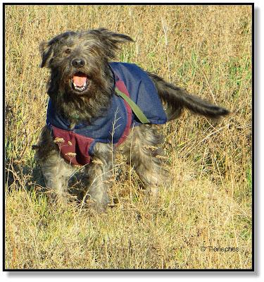 ältere Hunde brauchen einen Mantel