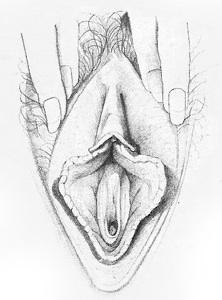 Жіночі статеві органи фото 4