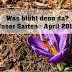 Was blüht denn da? Unser Garten April 2018 | adriantestet.wordpress.com