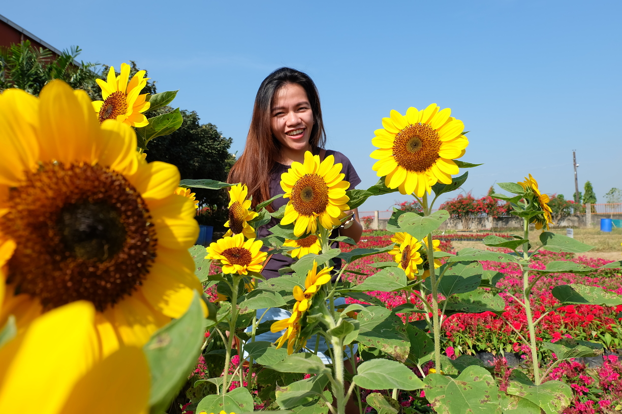 my photo with the sunflowers