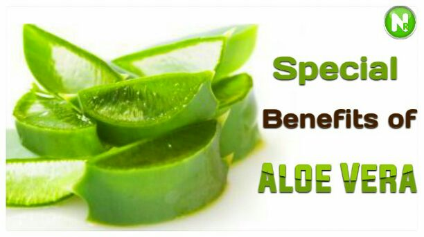 Special Benefits of Aloe Vera